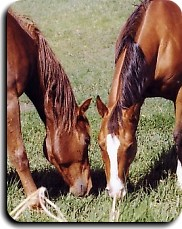Horse feed, horse care, equestrian needs